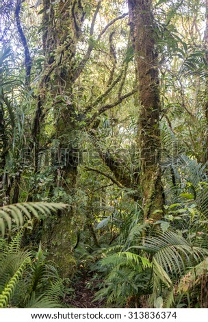 scene looking straight into a dense tropical rain forest - stock photo