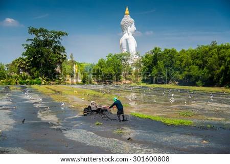 scene of culture farmer cultivation with big white buddha image  - stock photo