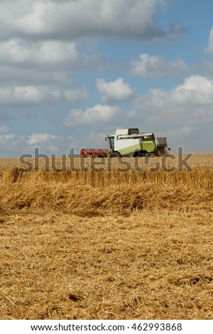 Scene of harvest against a blue sky with clouds. Working combine harvester on a partly harvested wheat field with dust straw in the air