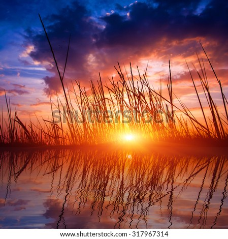 scene with dry grass on sunset sky background - stock photo