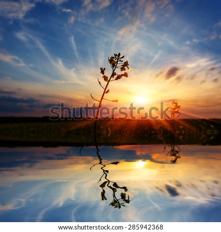 Scene with plant on sunset background with water reflection  - stock photo