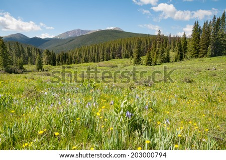 Scenery along the Boreas Pass road in Colorado. - stock photo