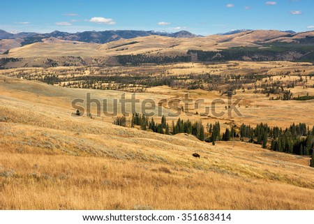 Scenery in Yellowstone National Park north of Dunraven Pass with a bison grazing on the hill. - stock photo