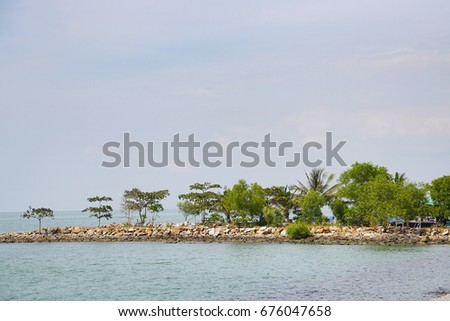 Scenery of green plant on the rocky shore