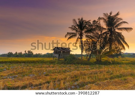 Scenery of paddy field in Perlis, Malaysia with an old abandoned wooden house in the middle of paddy field and colourful sunset sky. Soft focus and some motion blur due to long exposure.
