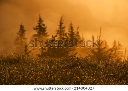 scenery of sunrise, sunrise over the forest and a sparkling grass, landscape image