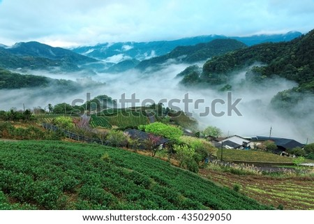 Scenery of tea gardens on a foggy spring morning in Ping-ling, a rural town near Taipei, Taiwan, with a view of ethereal fog in the valley and silhouettes of distant mountains - stock photo