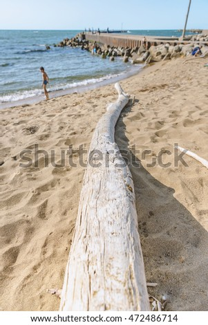 Scenery of the driftwood and summer beach