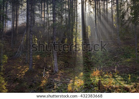 Scenery of the misty coniferous forest in autumn. - stock photo