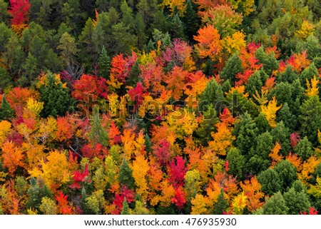Scenic aerial view of a road passing through the colorful forest at fall.