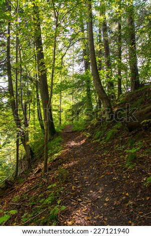 scenic and beautiful tourism trail in the woods near river. latvia.