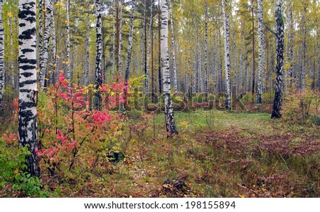 Scenic autumn landscape with colorful foliage mixed forest  on a cloudy day - stock photo
