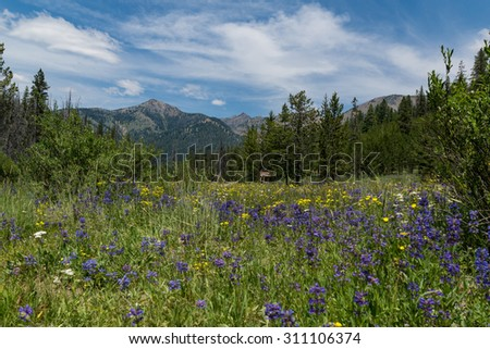Scenic Boulder Mountains with purple wildflowers in the foreground, Ketchum, Idaho, United States - stock photo