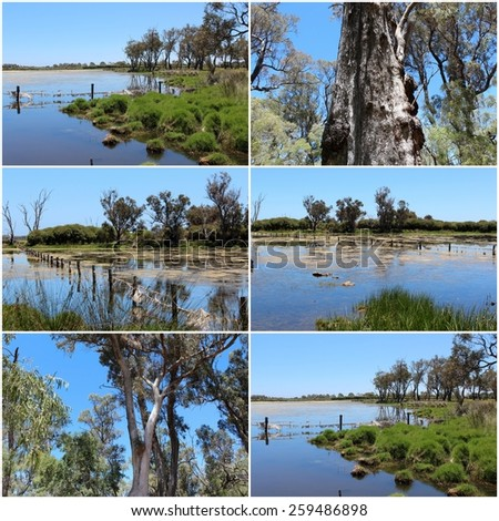 Scenic collage  of  the lake  at   Malbup Bird hide  in the  Tuart Forest National park near Busselton south west Australia  on a cloudy afternoon after heavy spring rains . - stock photo