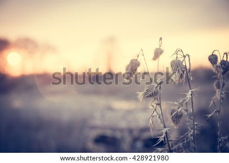 Scenic countryside landscape in soft tones with flower on foreground  in  rural field during sunrise with copy space . Back sunlight illuminates flowers - stock photo