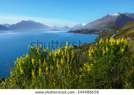 Scenic Drive from Queenstown to Glenorchy, with lupins flower, blue lake and snow mountains - stock photo