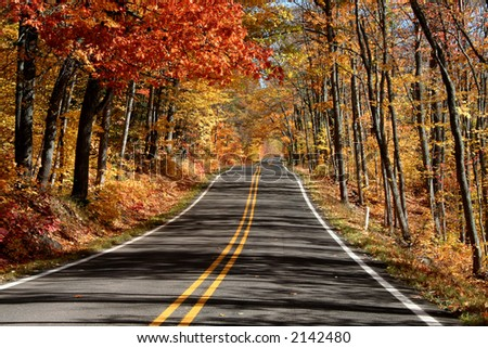 Scenic drive through wood autumn time