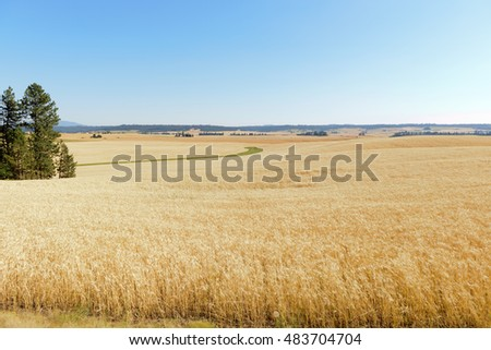 Scenic farmland with fields of wheat in Washington