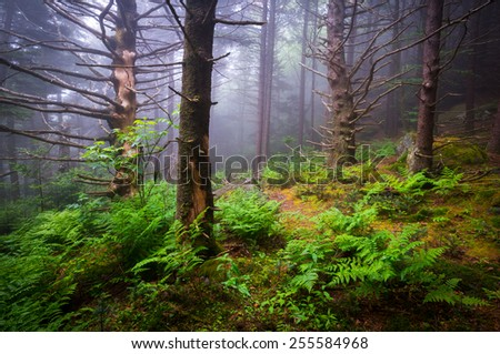 Scenic Forest Hiking Appalachian Trail North Carolina Nature Landscape along the border of western NC and eastern TN - stock photo