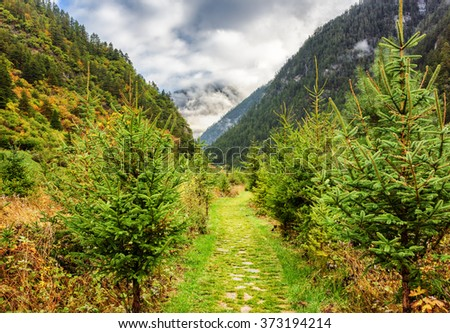 Scenic green walkway among woods in mountain gorge at Jiuzhai Valley National Park. Forest in the Min Mountains (Minshan), the Tibetan Plateau, Jiuzhaigou nature reserve, China. Beautiful landscape. - stock photo