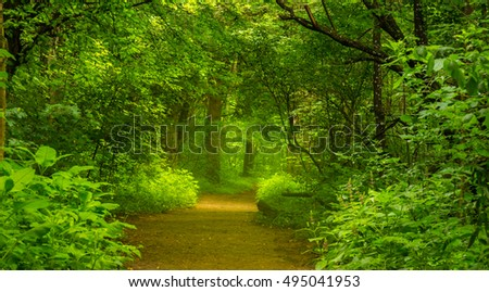 Scenic hiking trail in the forest in spring and selective natural light falling on the path