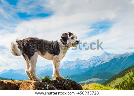 Scenic Hiking with a Polish Lowland Sheepdog Powderface Ridge, Kananaskis Country Alberta Canada - stock photo
