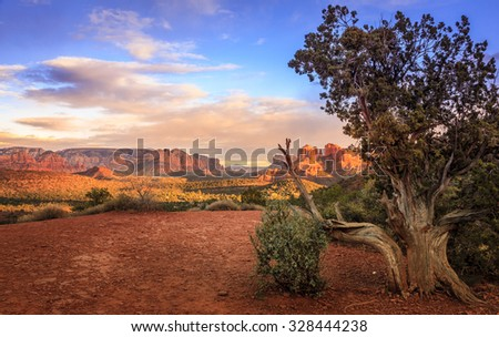 Scenic image of Cathedral Rock in Sedona, Arizona in the evening light with an old tree in the foreground - stock photo