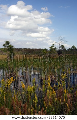 Scenic Landscape, Big Cypress National Preserve, Florida Everglades - stock photo