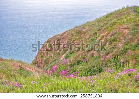Scenic landscape of wild pink flowers carpeting the cliff in Ireland  - stock photo
