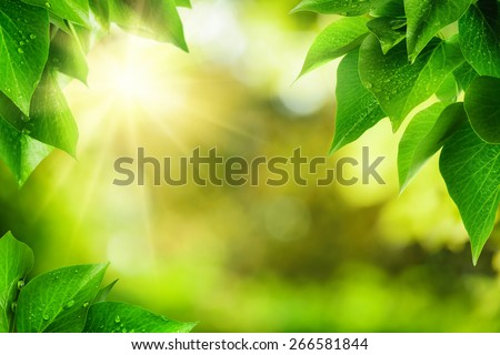 Scenic nature background of fresh lush green leaves with dewdrops, framing the out of focus vegetation with bekeh highlights and the sun, vibrant colors - stock photo