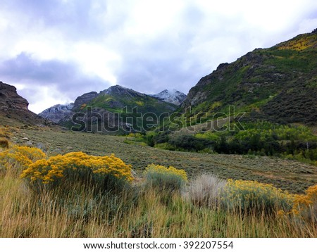 Scenic Nevada countryside with yellow prairie flowers - landscape color photo - stock photo