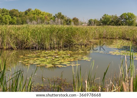 Scenic of swamps in national park - stock photo