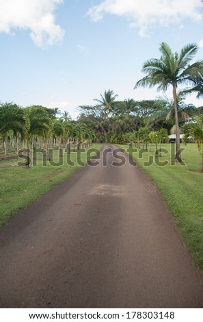 Scenic plants and trees in tropical Hawaiian plantation - stock photo