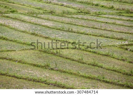 Scenic Rice Fields at Rhi Lake in Chin State, Myanmar (Burma) - stock photo