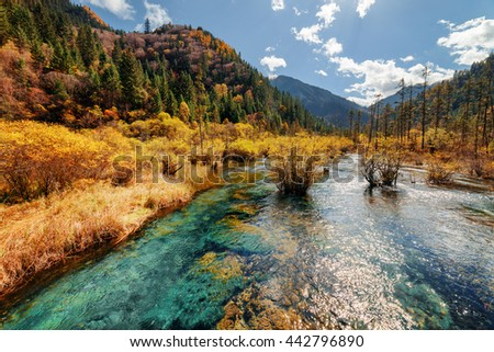 Scenic river with crystal clear water among fall forest and beautiful wooded mountains at the Rize Valley in Jiuzhaigou nature reserve (Jiuzhai Valley National Park), China. Amazing autumn landscape.