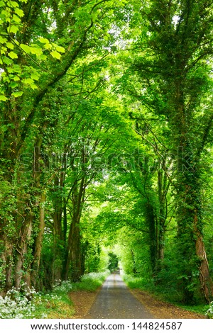 Scenic road through green forest in England