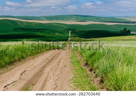 Scenic rural road through rolling hills and wheat fields, leads to the horizon in the Palouse area, eastern Washington, USA.  - stock photo