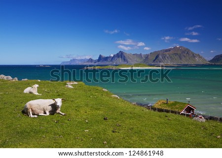 Scenic sheep farm on Lofoten islands in arctic Norway with high mountain peaks towering from the sea - stock photo