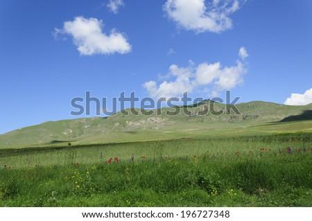 Scenic summer landscape - stock photo