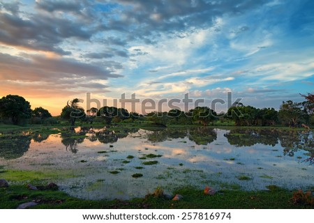 Scenic sunset in African swamps in national park - stock photo