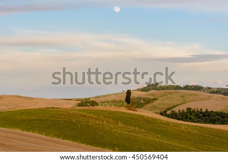 Scenic sunset landscape with cypress tree, soft hills, and moon rise in the sky