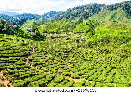 Scenic tea plantations in cameron highlands, Malaysia - stock photo
