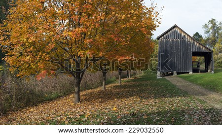 scenic view of a barn near a path by a line of colorful autumn trees