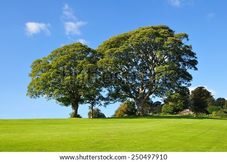 Scenic View of a Beautiful Spacious Green Garden against a Clear Blue Sky - stock photo
