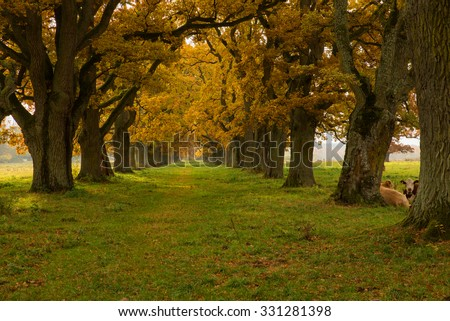Scenic view of a country landscape in autumn with cows - stock photo