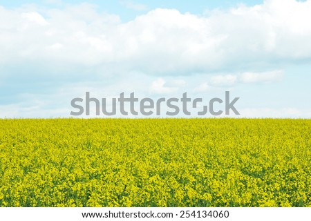 Scenic View of a Field of Crops Growing on Farmland against a Beautiful Sky