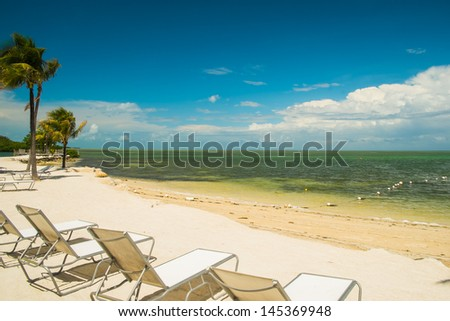 Scenic view of a Florida Keys beach with coconut palm trees and lounge chairs along the shoreline.