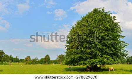 Scenic View of a Green Field and Trees in Summer - stock photo