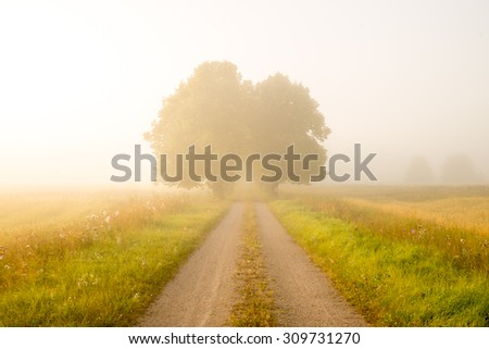 Scenic view of a misty country landscape in sunrise - stock photo