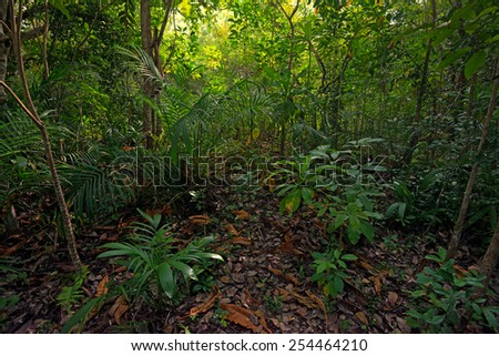 Scenic view of beautiful African jungle with lush foliage - stock photo